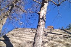 tree10a