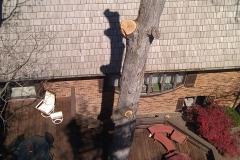 tree10c