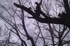 tree17b