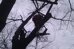tree17c