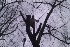 tree17d