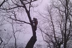 tree17e