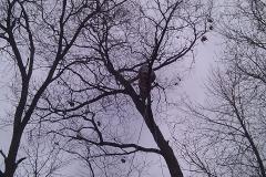tree17f