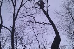 tree17g