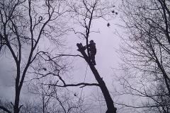 tree17h