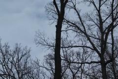 tree28c