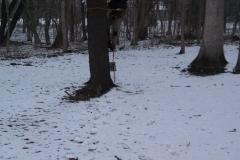 tree28e