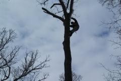 tree28g