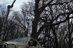 tree29