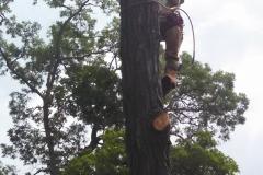 tree36