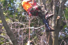 tree38