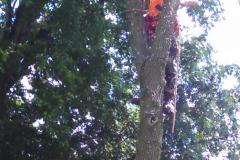 tree39a